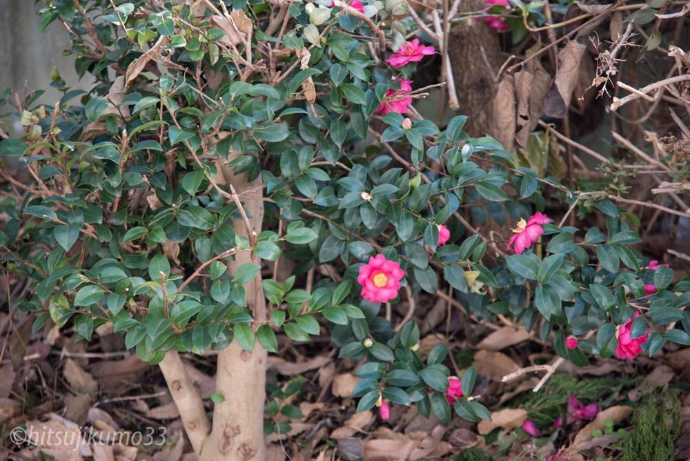 冬に咲く花 2